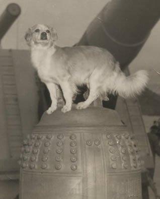 Vicky the dog aboard Battleship IOWA Museum Los Angeles